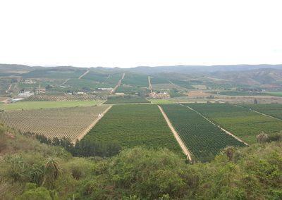 Patensie valley Eastern Cape